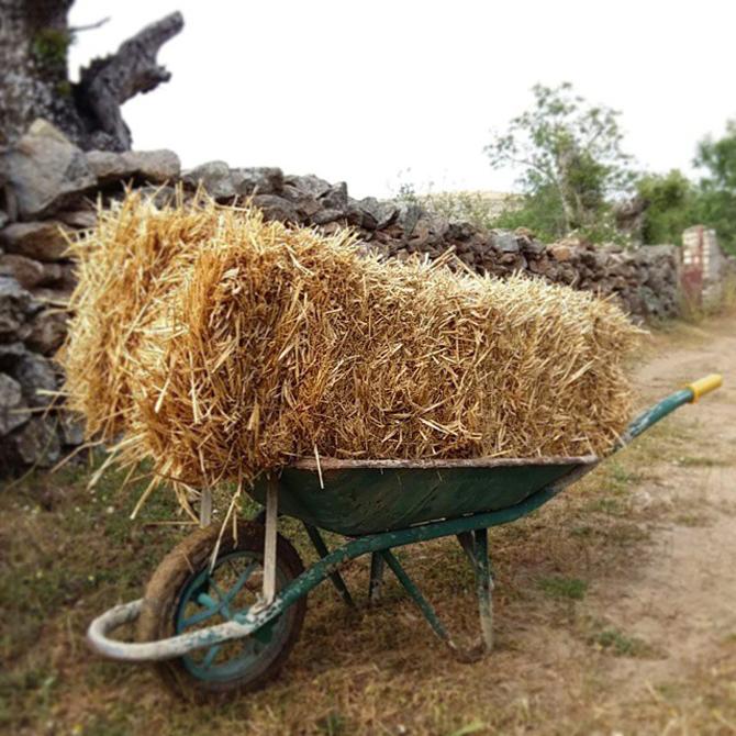 un-huerto-en-las-montanas_acolchado-mulching_permacultura-agroecologia