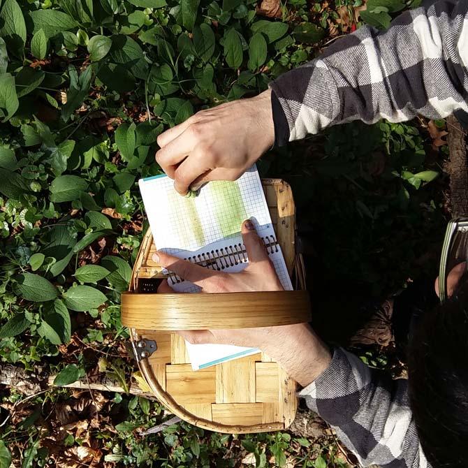 Evaluando el potencial tintóreo de la flora local_Investigación_Curso de Tintes Naturales
