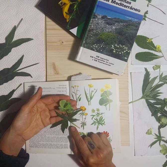 Identificando flora local potencialmente tintórea_Investigación_Curso de Tintes Naturales
