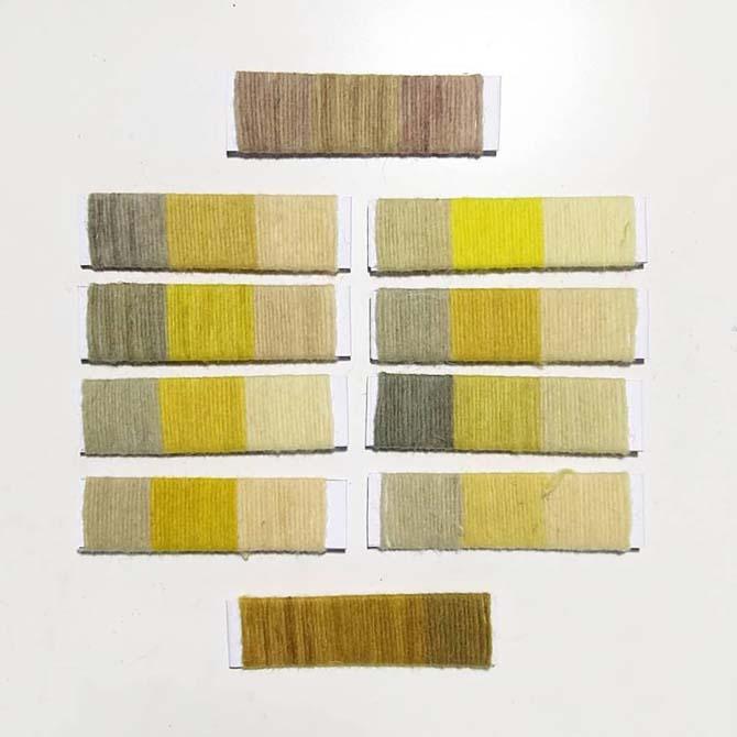 Muestras de lana teñida con tintes naturales_Investigación de plantas locales_Curso de capacitación en Tintes Naturales