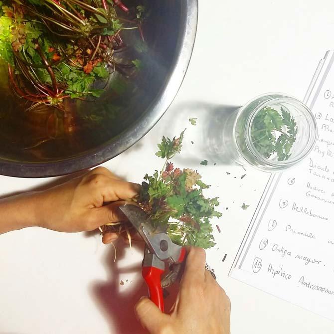 Preparando materias tintróreas_Curso de Tintes Naturales