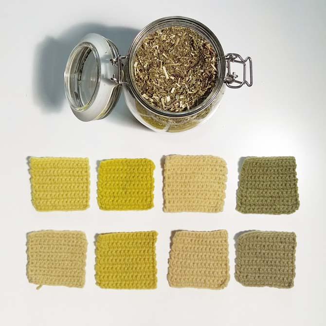 Fibras proteicas_Solidago_Curso de capacitación en Tintes Naturales en The Dyer's House