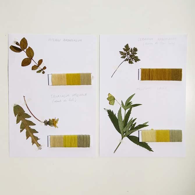 Herbario tintóreo_Curso de capacitación en Tintes Naturales en The Dyer's House_España