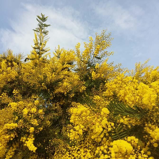 Identificando la flora tintórea local_Curso de Capacietación en Tintes Naturales
