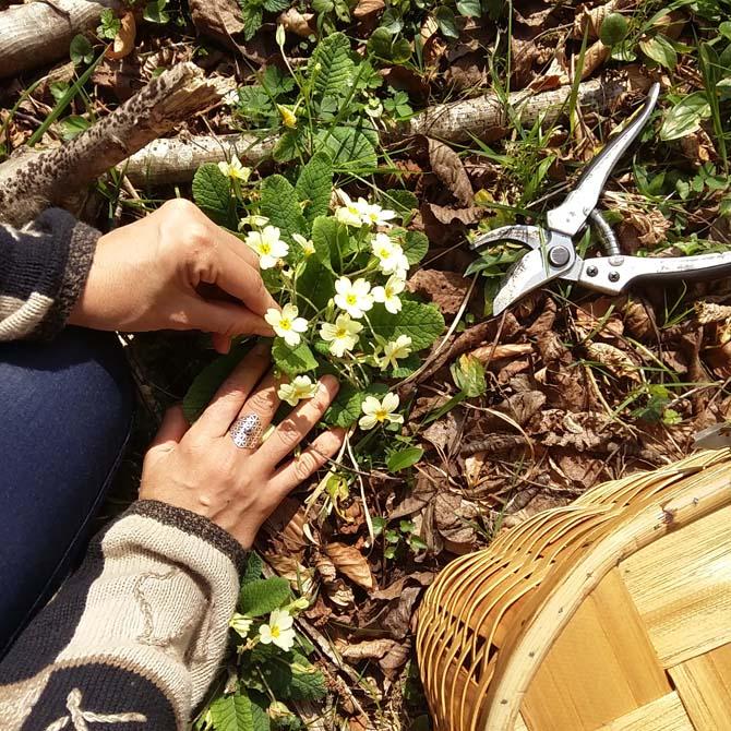 Recolectando flora local potencialmente tintórea_Curso de Tintes Naturales