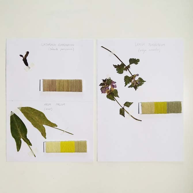 Herbario tintóreo_Curso de capacitación en Tintes Naturales en The Dyer's House