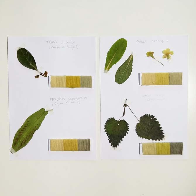 Herbario tintóreo_Curso de capacitación en Tintes Naturales en The Dyer's House_Cantabria