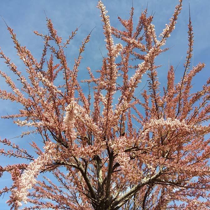 Identificación botánica_Curso de capacitación en Tintes Naturales_The Dyer's House