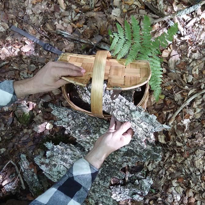 Investigación tintórea_Identificación botánica_Corteza_Curso de capacitación en Tintes Naturales_The Dyer's House
