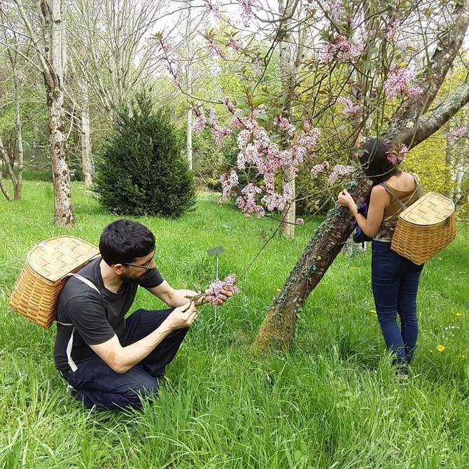 Investigación tintórea_Identificación botánica_Curso de capacitación en Tintes Naturales_The Dyer's House