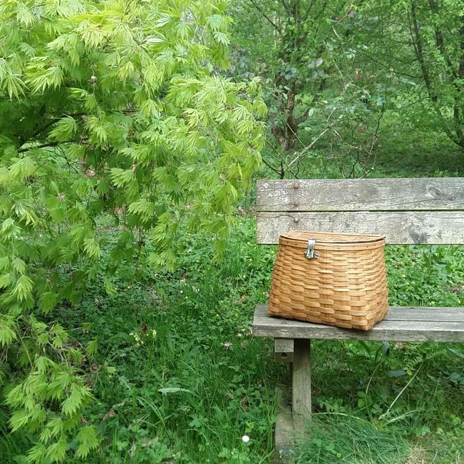 Investigación tintórea_Identificación botánica_Recolección tintórea_Curso de capacitación en Tintes Naturales_The Dyer's House